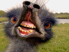 freaky emu