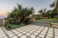 pandanus palm in landscaped gardens - Google Search