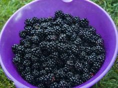 Blackberry, Pickles, Fruit, Cooking, Food, Gardening, Tea, Syrup, Kitchen