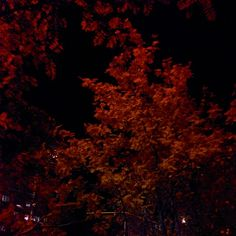 Autumn :)