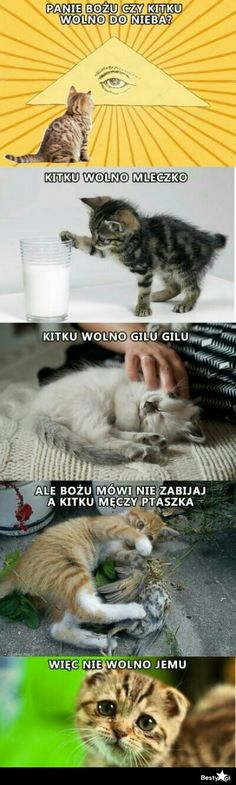 Animals And Pets, Funny Animals, Cute Animals, Polish Memes, Funny Mems, Happy Photos, Wtf Funny, Hilarious, Man Humor