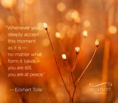 """Whenever you deeply accept this moment as it is — no matter what form it takes — you are still, you are at peace."" - Eckhart Tolle, author of the bestselling book THE POWER OF NOW. newworldlibrary.com"