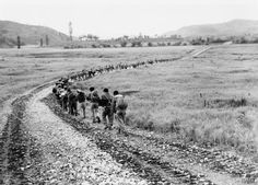 Korean labourers carries barbed wire posts up to positions north of the Imjin River for the Princess Patricia's Canadian Light Infantry. MH 33243