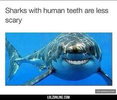 Shark Smiles#funny #lol #lolzonline