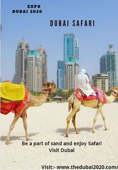 Be a part of sand and Enjoy Safari Come visit Dubai Dubai Safari, Expo 2020, Visit Dubai, Abu Dhabi, Wonderful Places, Dreaming Of You, Camel, Animals, Dreams