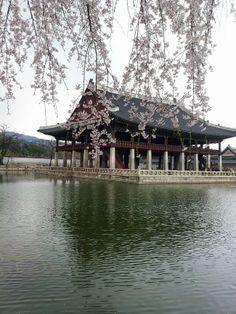 Palace in Spring, Seoul, Korea Seoul Korea, Parks, Korean Peninsula, South Korea Travel, Dream City, Pretty Pictures, Land Scape, Beautiful Places, Scenery