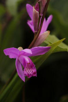 En güzel dekorasyon paylaşımları için Kadinika.com #kadinika #dekorasyon #decoration #woman #women Purple Orchid