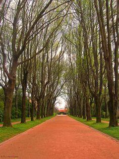 Jardim da Casa de Serralves www.webook.pt #webookporto #porto #jardim