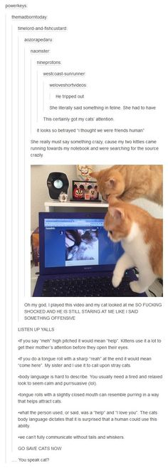 Funny pictures about Cat Hears Owner's Realistic Meow And Gets Really Confused. Oh, and cool pics about Cat Hears Owner's Realistic Meow And Gets Really Confused. Also, Cat Hears Owner's Realistic Meow And Gets Really Confused photos. Animals And Pets, Funny Animals, Cute Animals, Funniest Animals, Crazy Cat Lady, Crazy Cats, Tumblr Funny, Funny Memes, Cat Memes