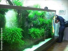 Dream - ADA Nature Aquarium Party 2010 - Parte III (Casa Takashi Amano) - YouTube