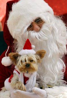¡Feliz Navidad para todos ustedes!