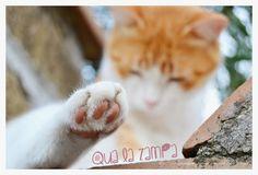 #micio #cats #cat #kitty Kitty, Wallpaper, Cats, Animals, Little Kitty, Kitten, Gatos, Kitty Cats, Animaux