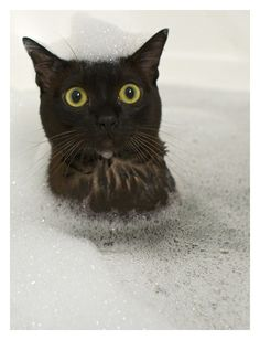 Tips for bathing your cat