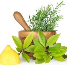 Propiedades medicinales de la madreselva(Lonicera caprifolium, lonicera): Enfermedades respiratorias. Las propiedades medicinales de la madreselva son prin
