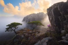 Favorite of the Year by Nathaniel Merz