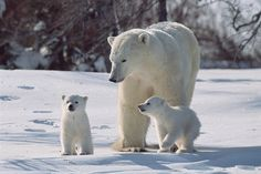 Cute Polar Bear Wallpaper For Mac · Artistic Desktop HD Wallpapers