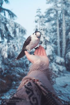 Sweet Little Soul by elizabethgadd #animals #animal #pet #pets #animales #animallovers #photooftheday #amazing #picoftheday