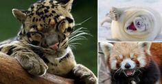 20 animales que parecen estar extremadamente felices