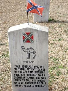 """Old Douglas"""", the Confederate Camel. Buried in Cedar Hill Cemetery """"Soldiers Rest"""", Vicksburg, MS.  Old Douglas was the Mascot of the 43rd Ms Infantry. He served with the Unit until he was killed by a Union sharpshooter at Vicksburg.  The marker reads: """"Old Douglas was the faithful, patient camel of the 43rd Ms. Infantry Vols. CSA. Douglas was a Dromedary Camel, and was given to Col. Moore by Lt. Hargrove of Co. B._"""" - photo courtesy of Paula"""