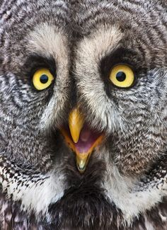 If owls could talk...