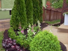 Emerald Green arborvitae,  which will eventually reach 12 to 15 feet tall, are a good choice for a four season privacy planting. In the foreground, a Green Mountain boxwood can be easily maintained at 3 to 6 feet.
