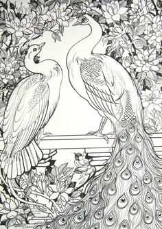 White Peafowl and Roses by HouseofChabrier on DeviantArt