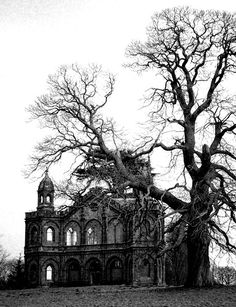 awesome old house and big old tree