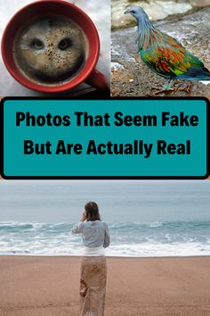 If you spend time on the internet all day, then you get to know what's real and what's fake. There are many photographs which seem amusing, and they look so genuine. But after researching the source, you realize that it's completely photoshopped. That pisses you off because you were just about to share it with friends. Not to worry, here we have collected 100 mind-blowing photos, that have not been photoshopped in any way and are 100% authentic. Tvs, Mind Blown, Photographs, Photoshop, Internet, Friends, Amigos, Boyfriends, Tv