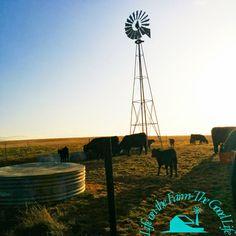 Life on the Farm-the Good Life: Windmill Wednesday