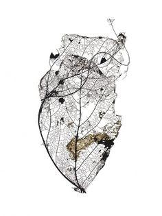 Black and white photography, leaf skeleton, fragile natural forms. At This Rate « Design in Surreal Leaf Skeleton, Earring Trends, A Level Art, Leaf Art, Botanical Illustration, Textures Patterns, Art Inspo, Nature Photography, White Photography