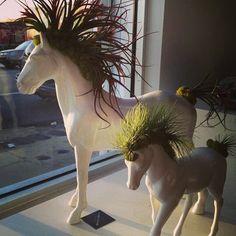 Horse / unicorn planters. Indoor Garden & Plants