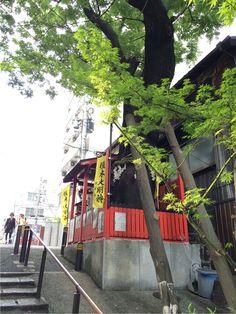 大阪。空崛商店街。小巳。 這棵樹真是非常大,非常顯眼。我也向小巳許願了。