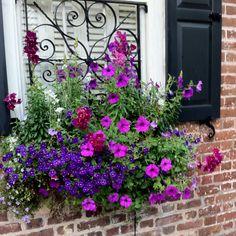 Window box -   Love the colors