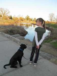 Follow the adventures of Lassen (service dog in training for a disabled child) at: http://pawsitivesolutions.org/service-dogs-in-training/kimber-service-dog-in-training/