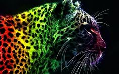 Rainbow outlined leopard