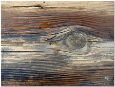 The EYE | Original Nature Fine Art Photography | Shapes in Nature | fPOE |  Framing the Moment ... by Sigal Krumer