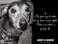 Senior dogs have gentle, wise souls and hearts of gold!.. I know I have watched all of my dogs die of old age while living together with their family of dogs and humans