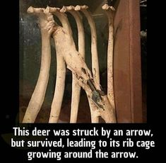 20 Most Awesome Pictures Of The Day 11 – 11 – 2018 Be the deer with the arrow Wow Facts, Wtf Fun Facts, Funny Animals, Cute Animals, Cool Pictures, Funny Pictures, Creepy Facts, Unbelievable Facts, Animal Facts