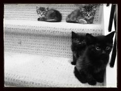Cats at The Bar: Step Kittens!