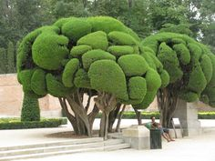 Sculpted trees, parque del retiro, madrid, spain #gardendesign