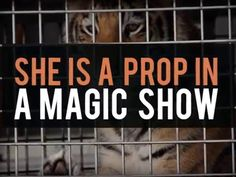PLEASE WATCH & SHARE TO RAISE AWARENESS & DON'T BUY A TICKET! Life in a cage - UniverSoul circus tigers