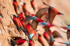 bee-eaters in zambia