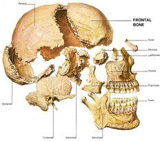 explosion skull ) parts skull