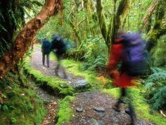 Hikers follow Milford Track in Fiordland National Park on New Zealand's South Island.