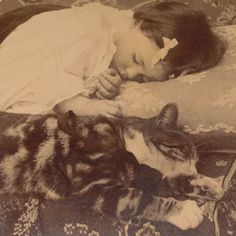 Girl and Cat Napping, Antique Victorian Photo, Stereoview, 1890s  For Sale by Anemone Antiques on Ruby Lane
