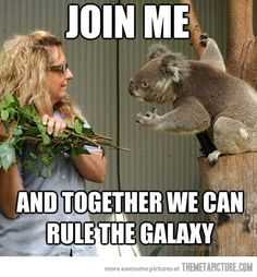 ...as keeper and Koala !!