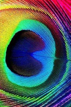 Rainbow Peacock Feather.  I Love it. ❤
