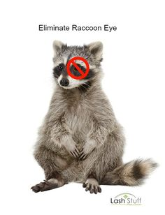 No need to suffer from Raccoon Eye. Lash Stuff has the cure. Eyelash Extension Supplies, Lash Lift, Volume Lashes, Beauty Junkie, Eyelash Extensions, Cure, Eyelashes, Lash Extensions, Lashes