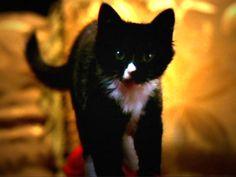 buffy cat miss kitty fantastico