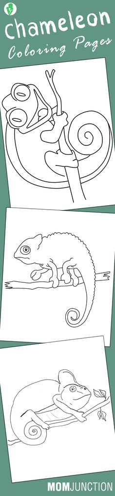 A Chameleon is an animal that changes its color to camouflage itself with its surroundings. Here are 10 free printable chameleon coloring pages for your kid Chameleon Craft, Mixed Up Chameleon, Chameleon Color, Animal Coloring Pages, Free Coloring Pages, Coloring Books, Coloring Worksheets, Alphabet Worksheets, Printable Worksheets